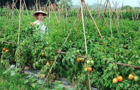 Tuyển nữ đi lao động Nhật Bản làm nông nghiệp