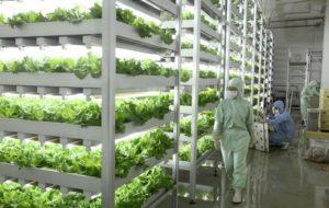 Đi du học Nhật Bản ngành nông nghiệp