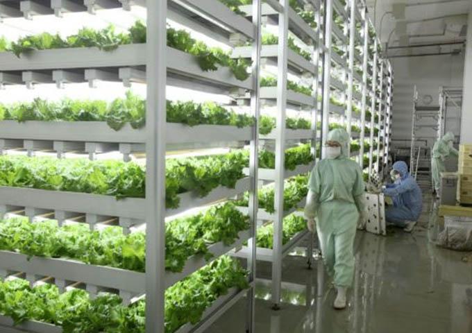 Du học Nhật Bản ngành nông nghiệp và thú y