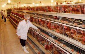 Tuyển 16 nam đi xuất khẩu lao động Nhật bản chăn nuôi gà