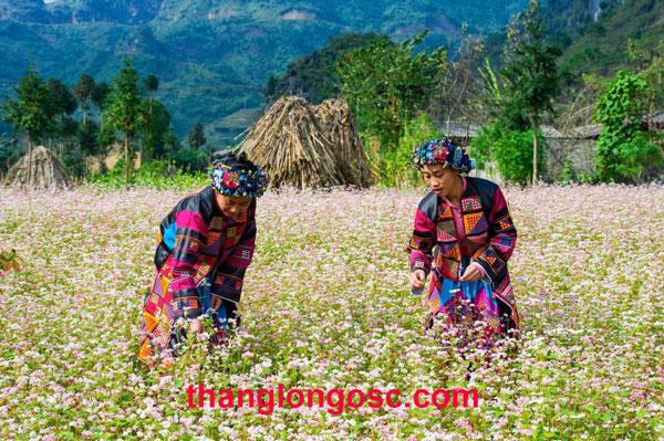 cong-ty-xuat-khau-lao-dong-tai-ha-giang