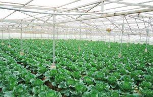 Đơn hàng xkld Nhật Bản nông nghiệp lương cao
