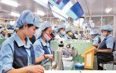 XKLĐ Đài Loan: Làm sao để chấn chỉnh bất cập và nâng cao chất lượng?