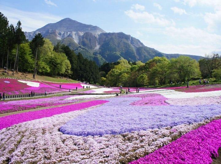 Những lý do bạn phải tới Saitama